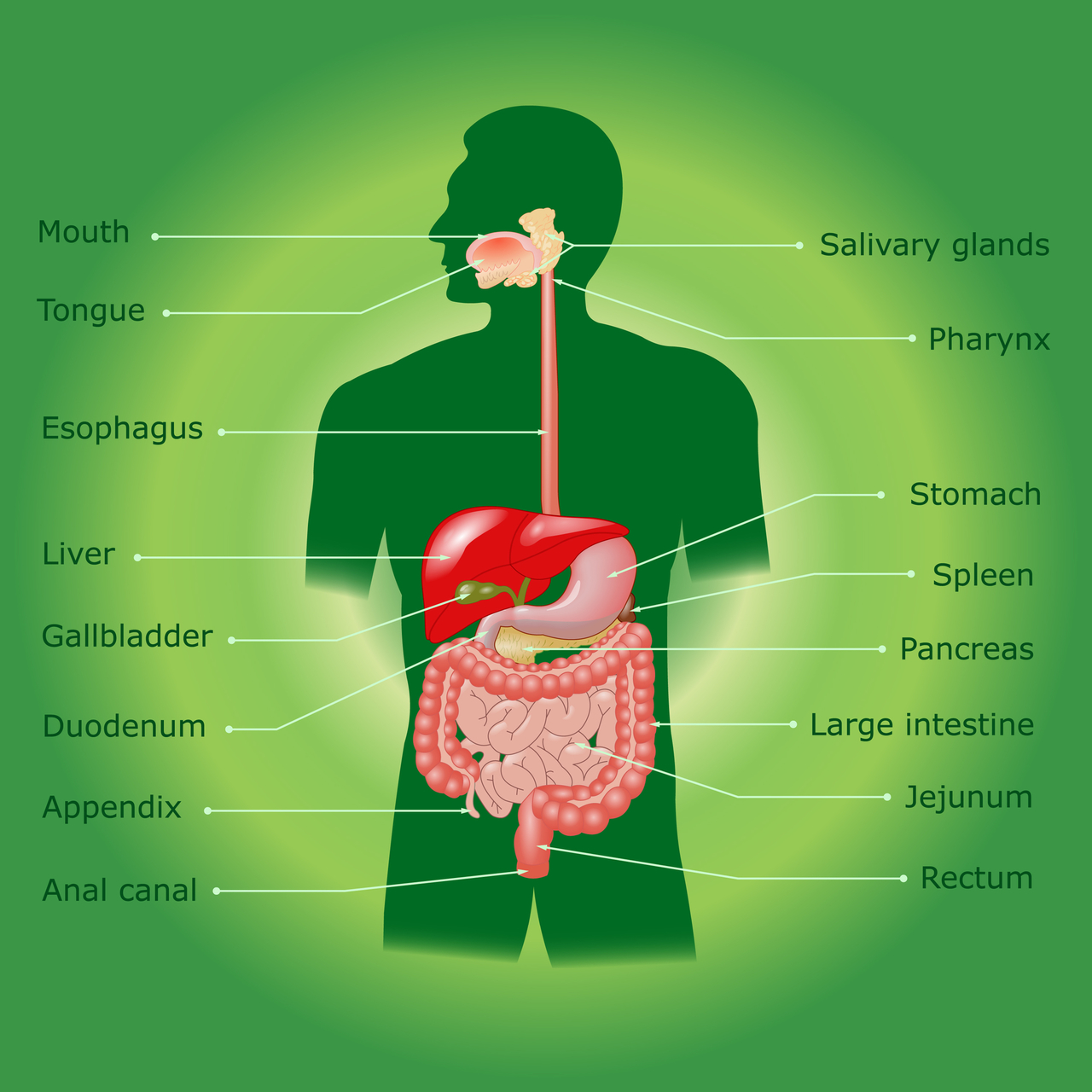 According to natural principles, good digestion begins in the gut! Use these to harmonize the entire digestive and eliminative system!