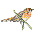 Bird on Branch.