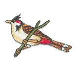 Wild Bird on a Branch