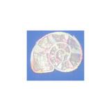 Pastel Sparkle Sea Shell,