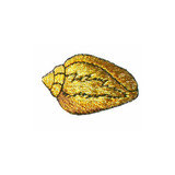 """Metallic Gold Shell Iron On Applique  Fully Embroidered   Measures 1"""" high x 1 1/2"""" wide approximately"""