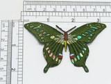 "Butterfly Sparkle Iris on Green 3 1/4"" x 2"" Applique"