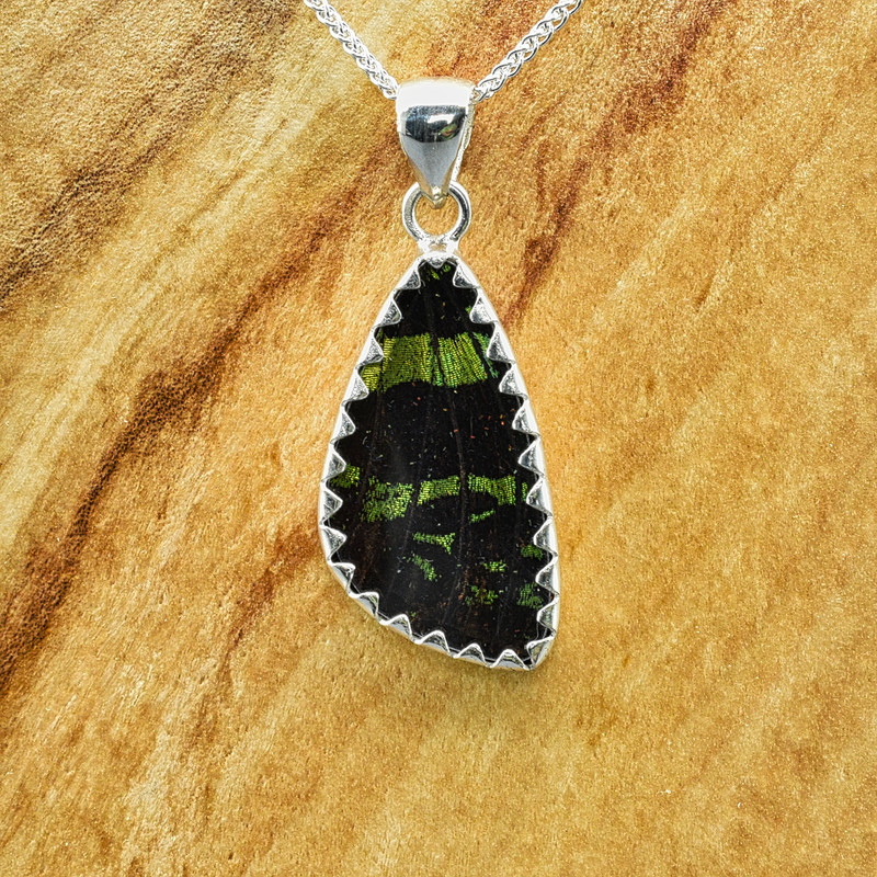 Small Madagascan Sunset Moth Sterling Bezel Pendant
