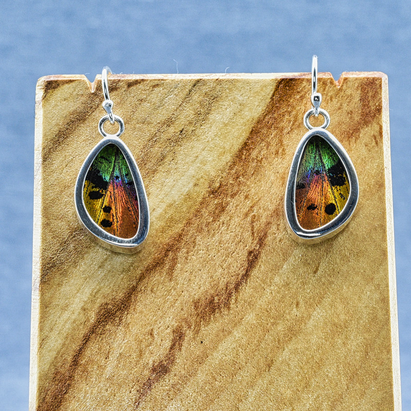 X-Small Madagascan Sunset Moth Sterling Bezel Earrings