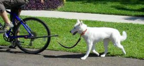 Dog running on K9 Cruiser