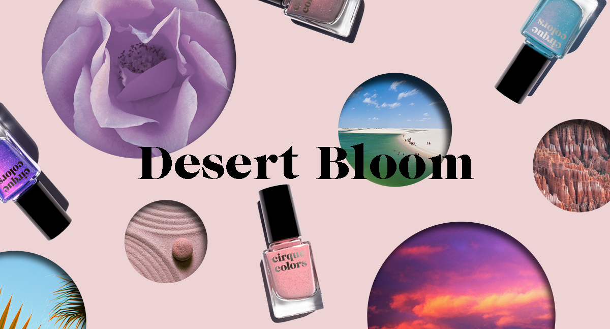 desert-bloom-blog-banner.jpg