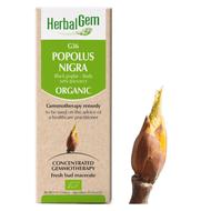 HerbalGem Gemmotherapy G36 Populus Nigra 50 ml