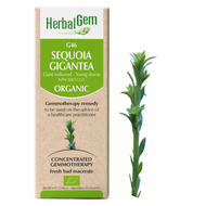 HerbalGem  Gemmotherapy G46 Sequoia gigantea 15 ml