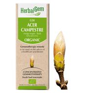 HerbalGem  Gemmotherapy G50 Acer campestre 15 ml
