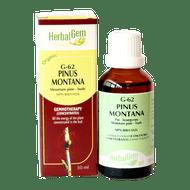HerbalGem Gemmotherapy G62 Pinus Montana 50 ml
