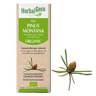 HerbalGem Gemmotherapy G62 Pinus Montana 15 ml