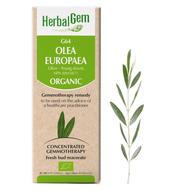 HerbalGem Gemmotherapy G64 Olea europaea 15 ml
