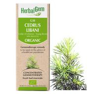 HerbalGem Gemmotherapy G38 Cedrus libani 50 ml