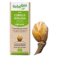 HerbalGem Gemmotherapy G49 Corylus avellana 50 ml