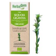 HerbalGem Gemmotherapy G46 Sequoia gigantea 50 ml