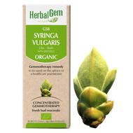 HerbalGem Gemmotherapy G58 Syringa vulgaris 50 ml
