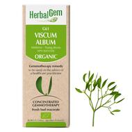 HerbalGem Gemmotherapy G61 Viscum album 50 ml
