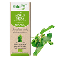 HerbalGem Gemmotherapy G92 Morus nigra 15 Ml