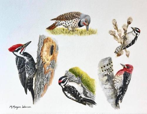 """""""Five Local Woodpeckers"""" by M. Morgan Warren"""