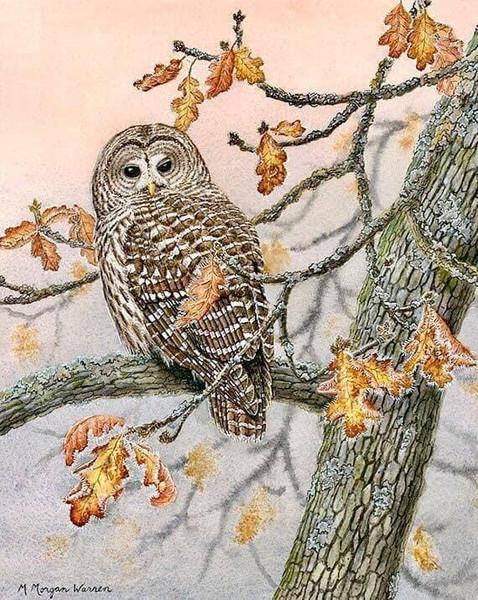 """A Dawn Frost"" by M. Morgan Warren"