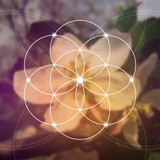 Be successful in your Ascension Process with these special frequencies!