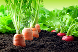Powerful frequencies for growing your vegetable garden, lawn or fruit trees!