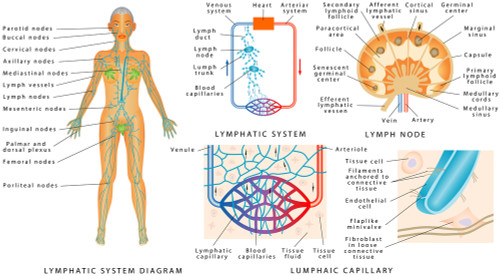 Lymphatic System Bioresonance Testing Panels