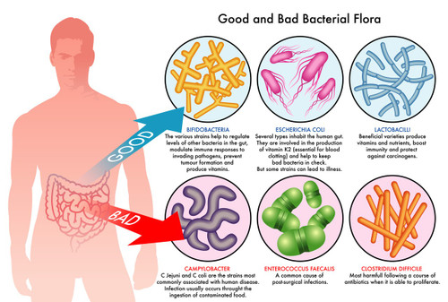 Heal the Gut Microbiome