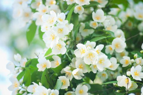 Worldwide Flower Essences for Emotional Healing