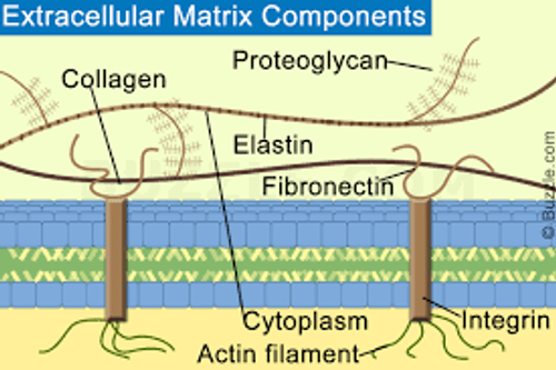 Send light to the tissue that runs throughout the body - the interstitium, which is part of the extracellular matrix.