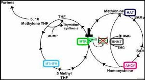 Master Methylation and Thrive!