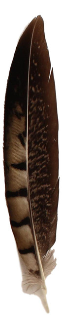 Dark Feather Hat Trim  - Copper and Black