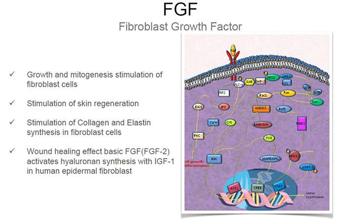 bioplacenta-FGF growth factor collagen elastin healing properties