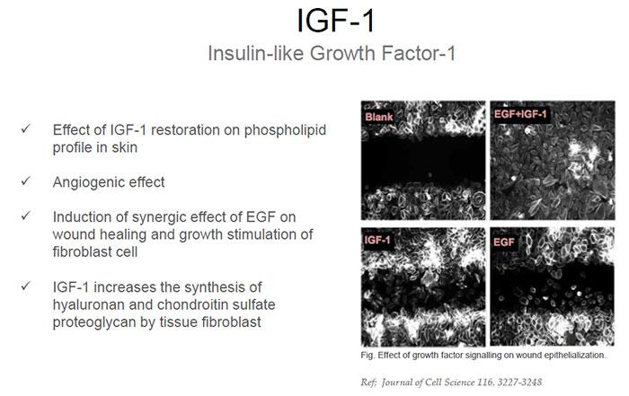 bioplacenta IGF-1 growth factor properties