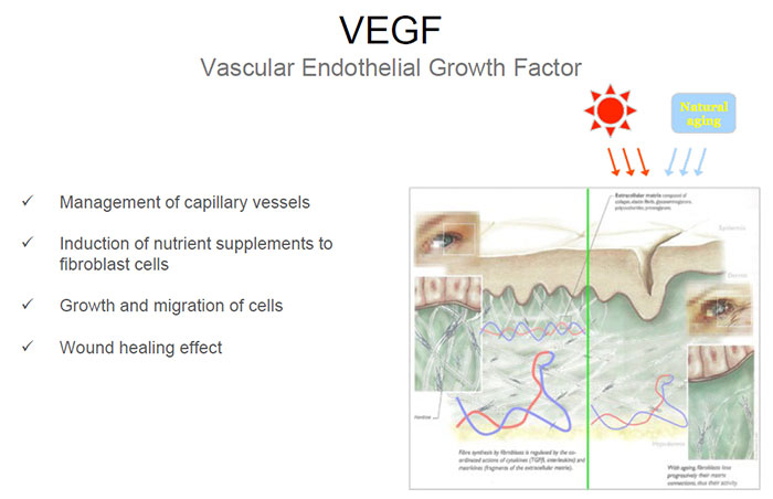 bioplacenta - VEGF capillary vessels and fibroblast nutrients and growth of cells during healing