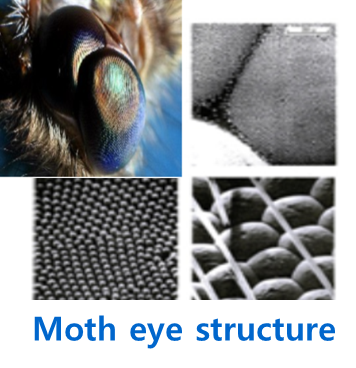 moth-eye-structure.png