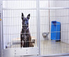 The prefect kennel cleaner