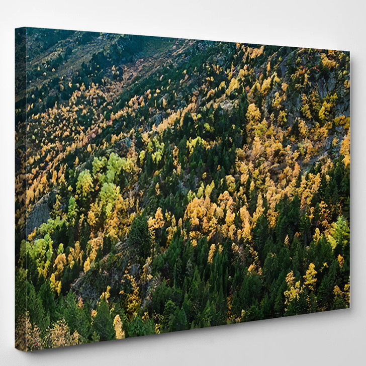 Autumn Forest Awesome Colors Andorra Fantastic - Bear Animals Canvas Art Print