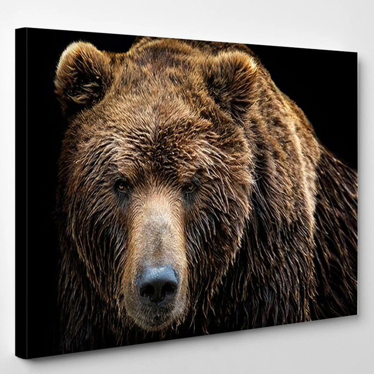 Front View Brown Bear Isolated On - Bear Animals Canvas Art Print