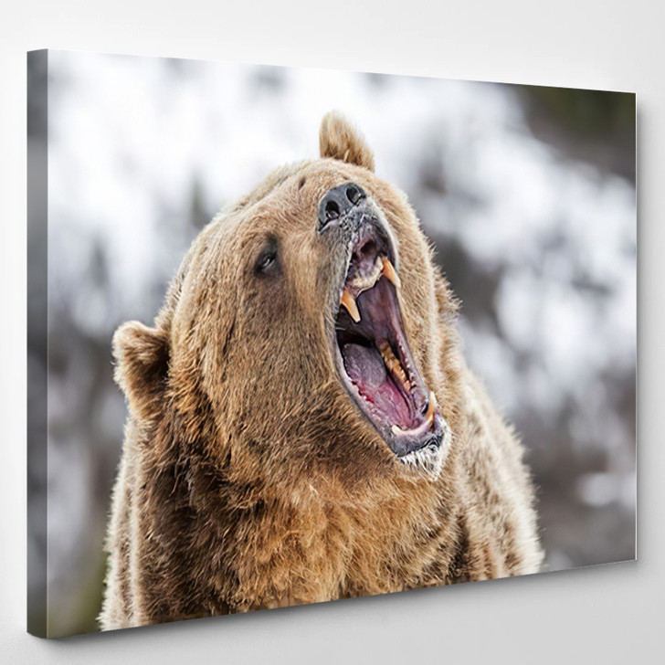 Grizzly Roaring Warning - Bear Animals Canvas Art Print