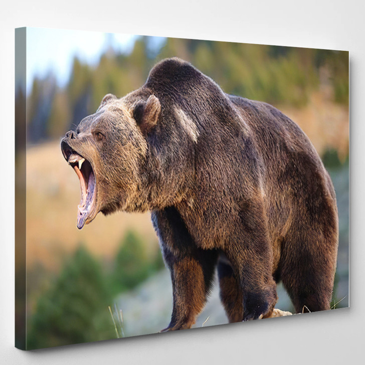 North American Brown Bear Grizzly Growling - Bear Animals Canvas Art Print