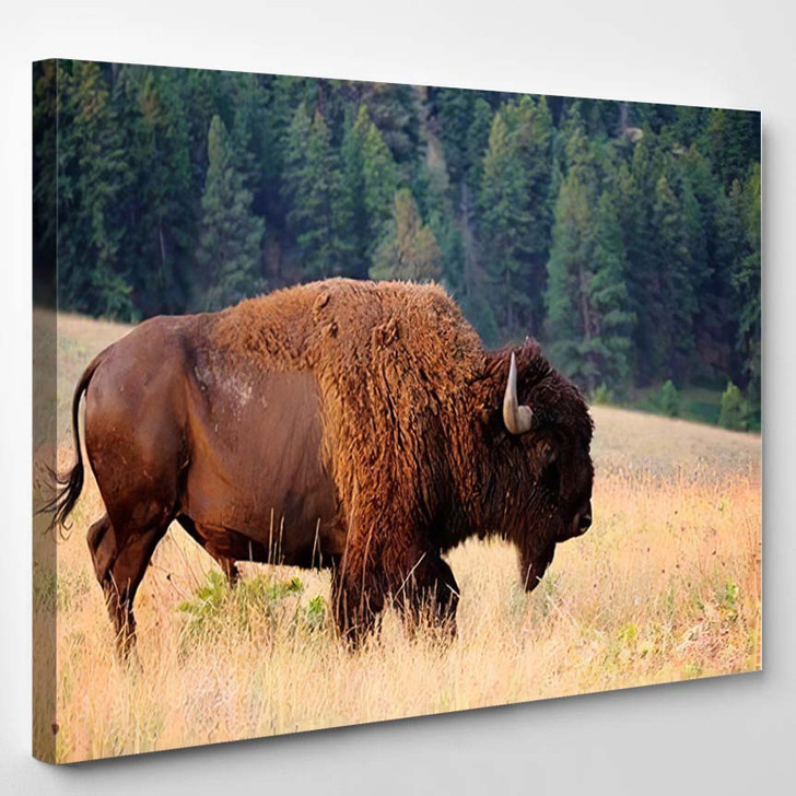 American Bison Buffalo Side Profile Early 1 - Bison Animals Canvas Art Print