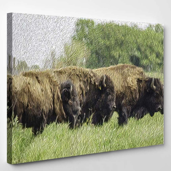 Painterly Abstract American Bison Binomial Name - Bison Animals Canvas Art Print