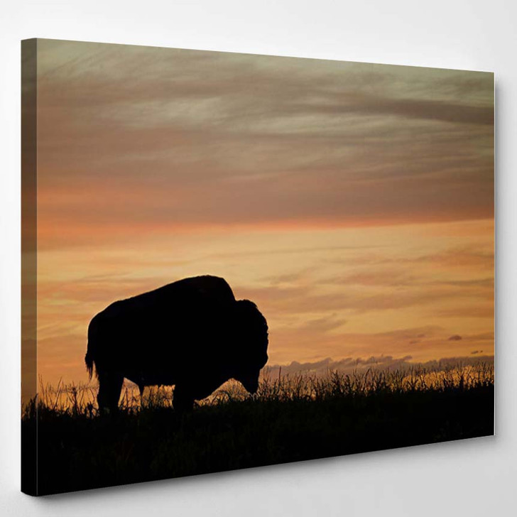 Silhouette Bison Buffalo Against Colorful Sunset - Bison Animals Canvas Art Print