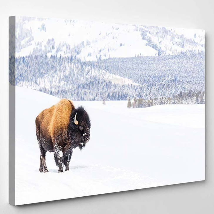 Snowy Bison Covered Snow Yellowstone National - Bison Animals Canvas Art Print