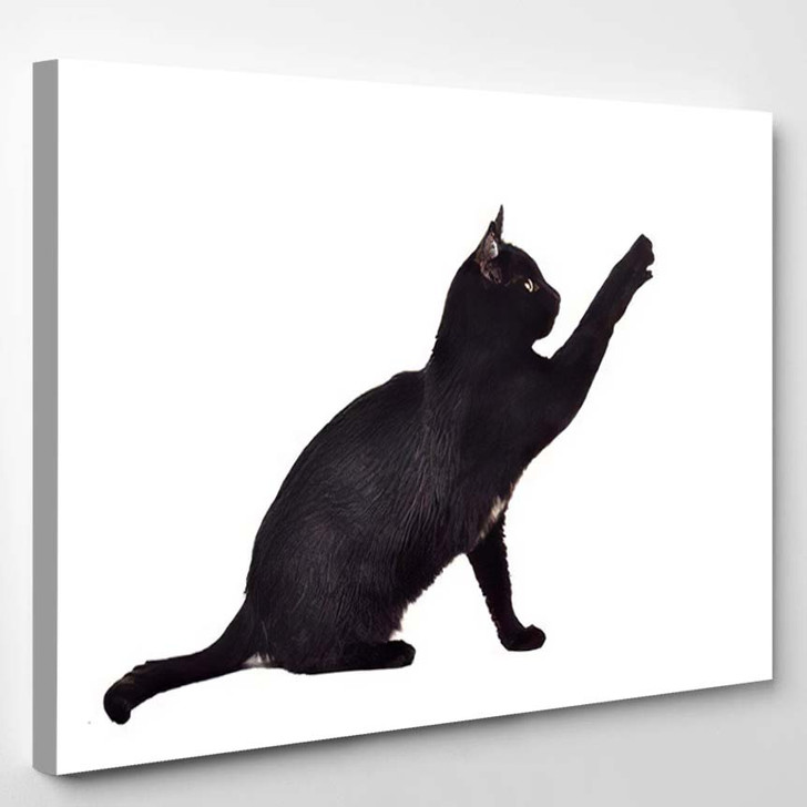 Black Cat Reaching Toy Showing Claws - Black Panther Animals Canvas Art Print