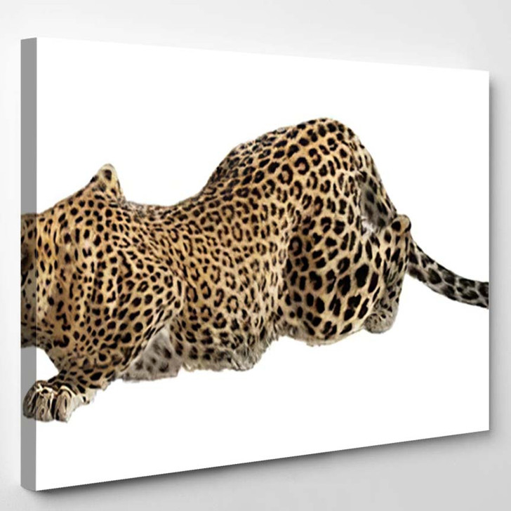 Prowling Jaguar Isolated - Black Panther Animals Canvas Art Print