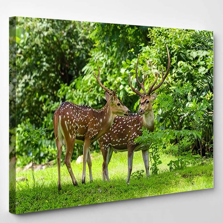 Cheetal Chital Deer Known Spotted Lush - Deer Animals Canvas Art Print