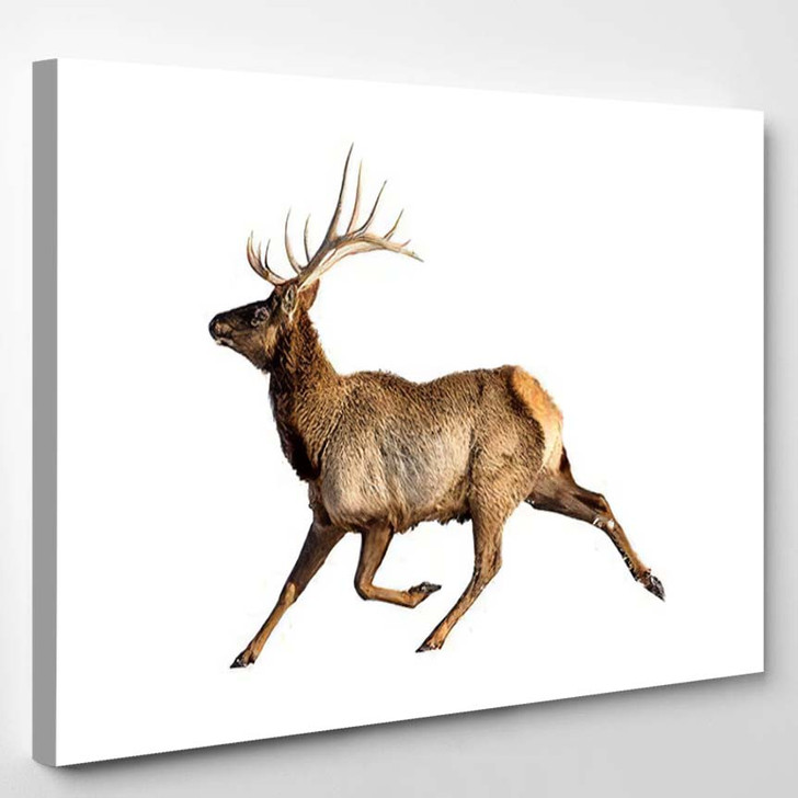 Reindeer Snow Isolated On White Background 1 - Deer Animals Canvas Art Print