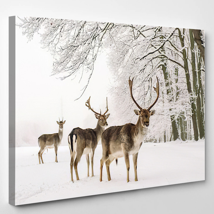 A Male Of Fallow Deer With Grate Antlers Standing On The Snow - Animals Canvas Art Print